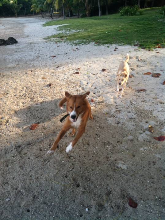 Our morning/evening routine: Hank runs around our beach like a mad man, Lina usually chases him, they wrestle a little, and then they both sprint back to me and nearly plow me over every time.