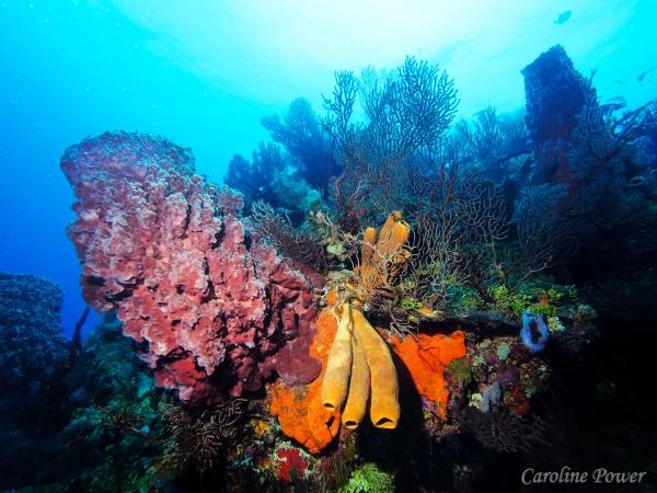 Photo of Helene Banks dive site in Roatan by Caroline Power