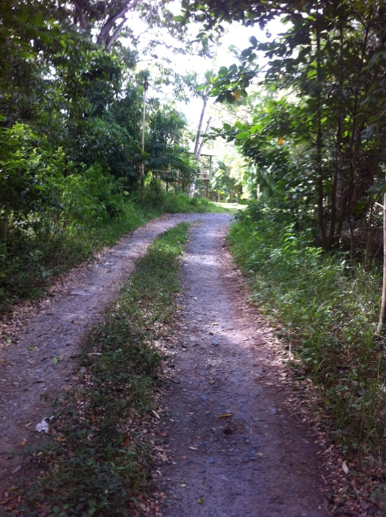 Roatan_neighborhood_road